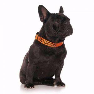 no dogs collar