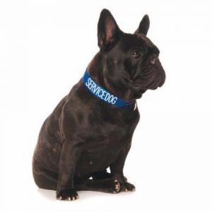 service dog collar