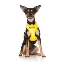 Shoot-Ya-Pooch Pet Photography
